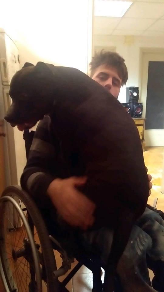Foto del ragazzo e del cane