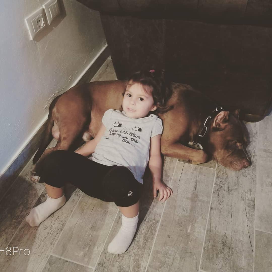 Pitbull e bambini come comportarsi