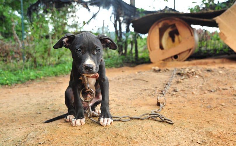 Dog fighting – I figli di nessuno