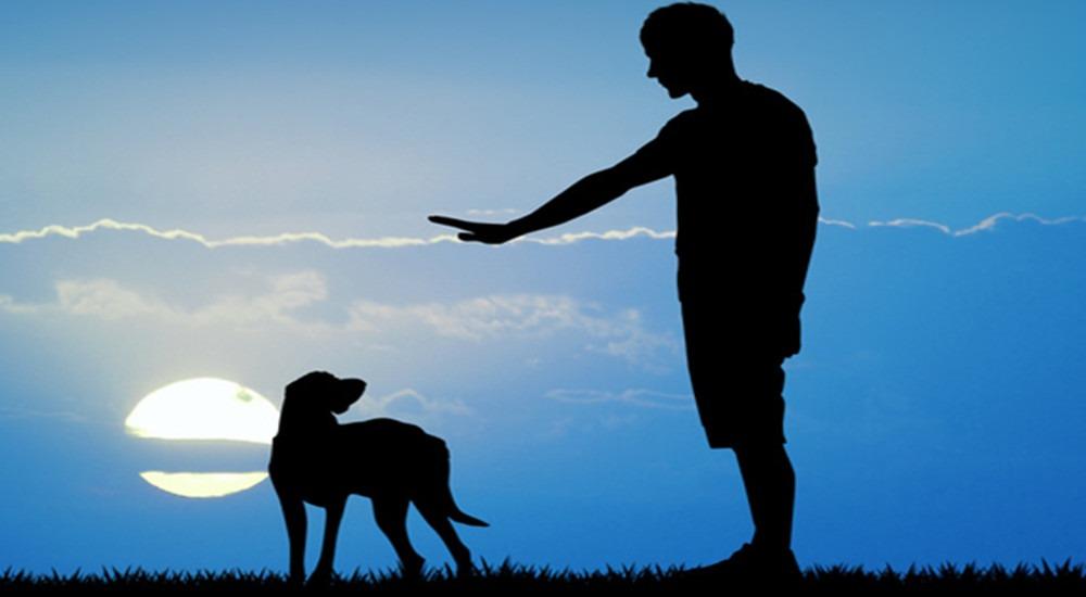 """""""Il cane deve essere libero di essere un cane"""" – Il valore delle regole"""
