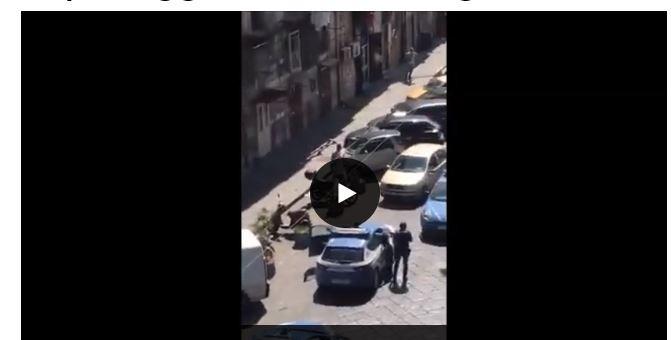 Napoli, pitbull ucciso da un poliziotto con due colpi di arma da fuoco
