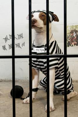 Danno non patrimoniale da morte del cane
